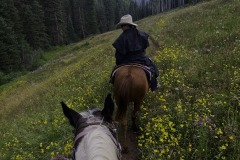 Riding with wrangler Michelle Bland of the Circle K Ranch, near the Dolores River, south of Rico, Colorado