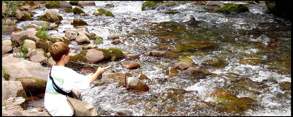 banner-fish