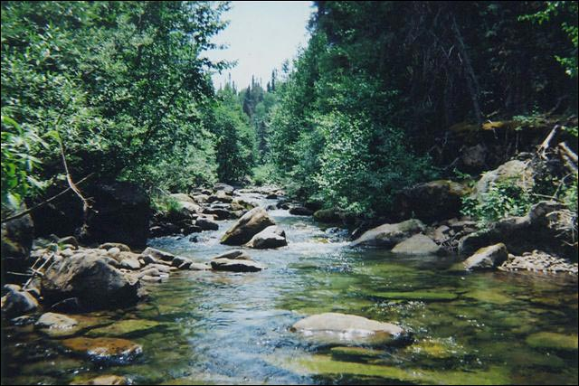 Flyfishing in southwest colorado near dolores and for Bear creek fishing